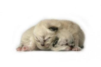 https://cf.ltkcdn.net/cats/images/slide/165802-850x565-165292-850x565-sleeping-kittens.jpg