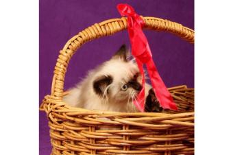 https://cf.ltkcdn.net/cats/images/slide/165803-850x565-165293-850x565-playful-kittens.jpg
