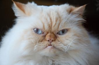 9 Funny Cat Videos