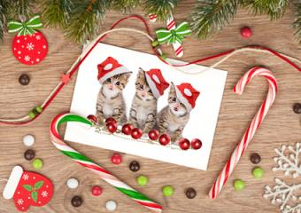 Where to Find Christmas Cards With Kitten Photos