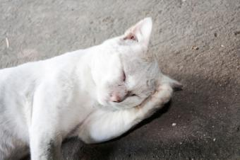 6 Reasons for Disorientation in Cats
