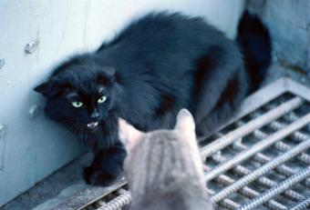 Reasons for Cat Aggression