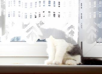 https://cf.ltkcdn.net/cats/images/slide/187671-725x532-kitty-behind-curtains.jpg