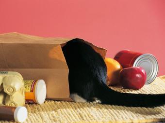https://cf.ltkcdn.net/cats/images/slide/187776-850x638-cat-hiding-in-grocery-bag.jpg