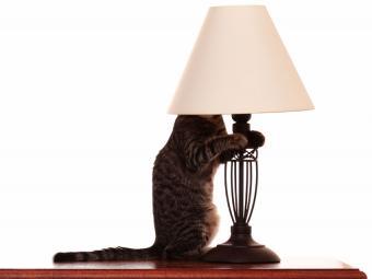 https://cf.ltkcdn.net/cats/images/slide/187777-850x638-cat-hiding-in-lamp-shade.jpg
