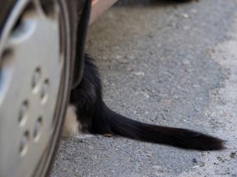 https://cf.ltkcdn.net/cats/images/slide/187778-850x638-cat-hiding-under-car.jpg