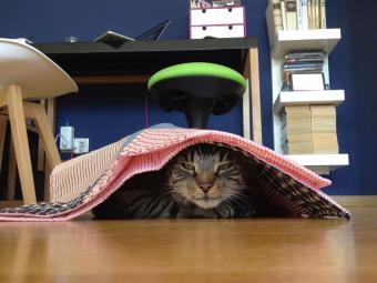 https://cf.ltkcdn.net/cats/images/slide/187780-850x638-cat-hiding-under-placemat.jpg