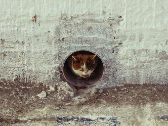 https://cf.ltkcdn.net/cats/images/slide/187782-850x638-cat-in-pipe.jpg