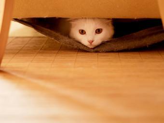 https://cf.ltkcdn.net/cats/images/slide/187783-850x638-cat-under-furniture.jpg
