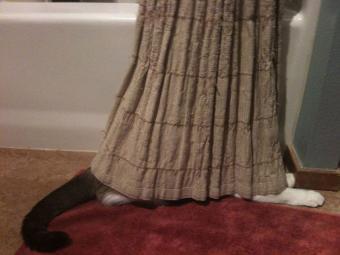 https://cf.ltkcdn.net/cats/images/slide/187784-850x638-cat-hiding-in-curtain.jpg