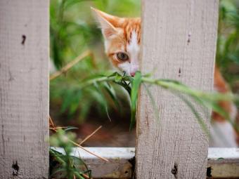https://cf.ltkcdn.net/cats/images/slide/187785-850x638-kitten-hiding-behind-fence-post.jpg
