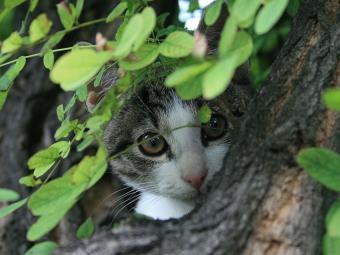 https://cf.ltkcdn.net/cats/images/slide/187787-850x638-kitten-hiding-in-tree.jpg