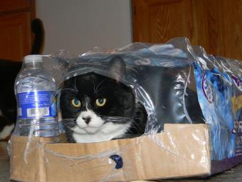 https://cf.ltkcdn.net/cats/images/slide/187789-850x638-Maxs-New-Hiding-Place.jpg
