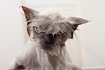 https://cf.ltkcdn.net/cats/images/slide/188151-850x566-kitty-bath-time.jpg