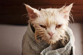 https://cf.ltkcdn.net/cats/images/slide/188153-850x566-cat-in-towel.jpg