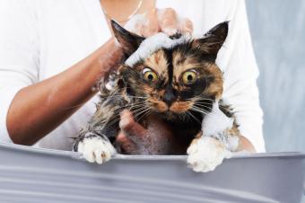 https://cf.ltkcdn.net/cats/images/slide/188154-850x566-cat-bubble-bath.jpg
