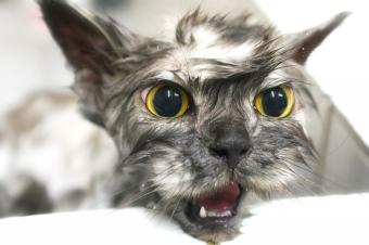 https://cf.ltkcdn.net/cats/images/slide/188155-850x566-wet-cat-bad-fur-day.jpg