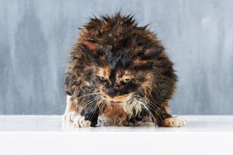 https://cf.ltkcdn.net/cats/images/slide/188157-850x566-wet-grumpy-cat.jpg