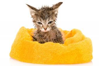 https://cf.ltkcdn.net/cats/images/slide/188162-850x566-soggy-kitten-after-bath.jpg