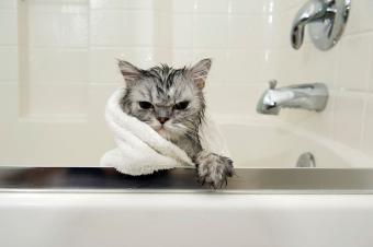 https://cf.ltkcdn.net/cats/images/slide/188165-850x566-Bathtime-Catitude.jpg