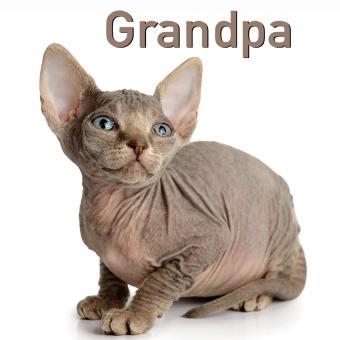 https://cf.ltkcdn.net/cats/images/slide/188224-850x850-Grandpa.jpg