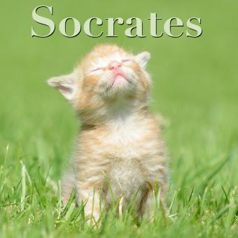 https://cf.ltkcdn.net/cats/images/slide/188226-850x850-Socrates.jpg
