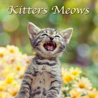 https://cf.ltkcdn.net/cats/images/slide/188228-850x850-Kitters-Meows.jpg