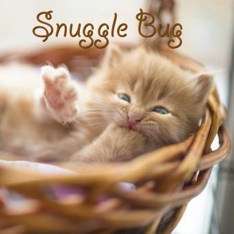 https://cf.ltkcdn.net/cats/images/slide/188233-850x850-Snuggle-Bug.jpg