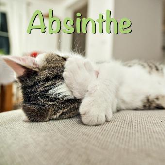 https://cf.ltkcdn.net/cats/images/slide/188234-850x850-Absinthe.jpg