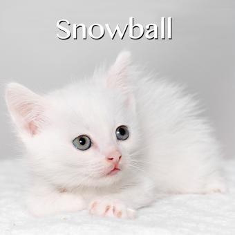https://cf.ltkcdn.net/cats/images/slide/188235-850x850-Snowball.jpg