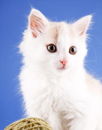 Pictures of Cute Fuzzy Kittens