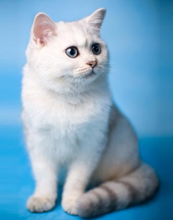 https://cf.ltkcdn.net/cats/images/slide/188395-668x850-Cute-fuzzy-5.jpg