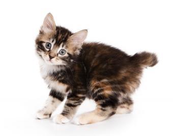 https://cf.ltkcdn.net/cats/images/slide/188399-850x668-Cute-fuzzy-8.jpg