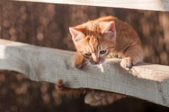 8 Hilarious Kitten Jump Fails