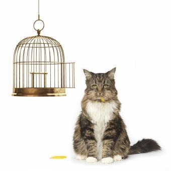 https://cf.ltkcdn.net/cats/images/slide/188486-850x850-cat-bird-cage.jpg