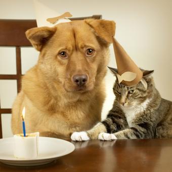 https://cf.ltkcdn.net/cats/images/slide/188488-850x849-dog-cat-birthday.jpg