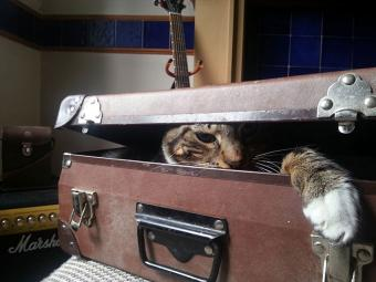 https://cf.ltkcdn.net/cats/images/slide/188591-850x638-cat-hiding-in-suitcase.jpg