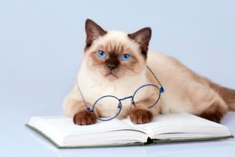 10 Mind-Blowing Facts About Cats