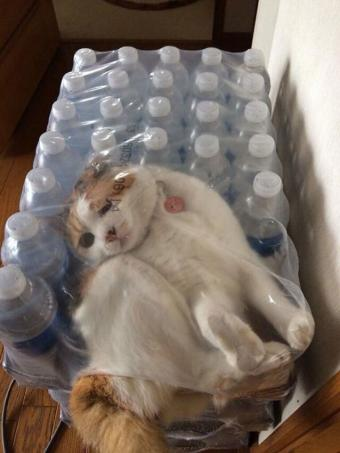 https://cf.ltkcdn.net/cats/images/slide/195116-638x850-packaged_pumpkin_by_dcmkazarathmage.jpg