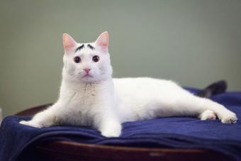 https://cf.ltkcdn.net/cats/images/slide/195117-850x567-Eyebrows-on-Sam-the-cat.jpg