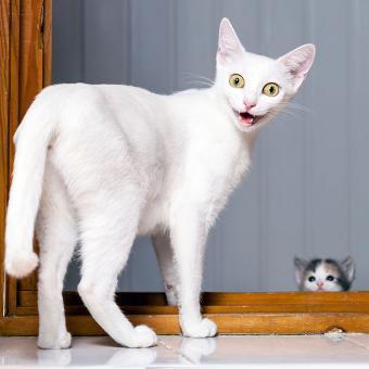 https://cf.ltkcdn.net/cats/images/slide/195121-850x850-funny-cat-expression.jpg
