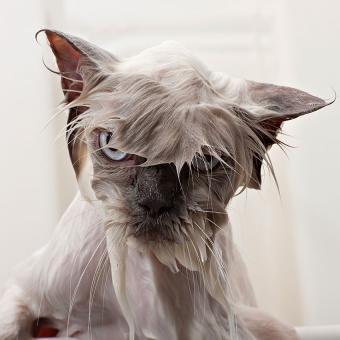 https://cf.ltkcdn.net/cats/images/slide/195123-850x850-water-logged-cat.jpg