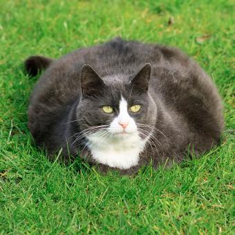 https://cf.ltkcdn.net/cats/images/slide/195126-850x850-Puddle-of-Cat.jpg