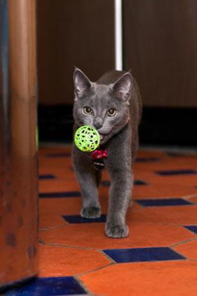 Cat fetching