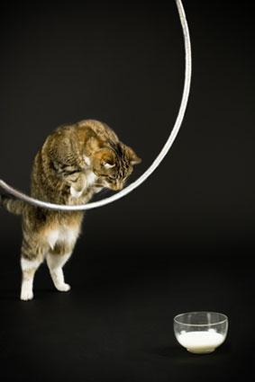Cat jumping through hoop