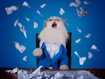 Cat manager in a suit shredding office papers