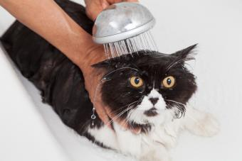 Cat getting rinsed in the tub
