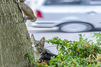 Cat and squirrel having a standoff outside