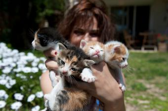6 Signs You're A Crazy Cat Lady