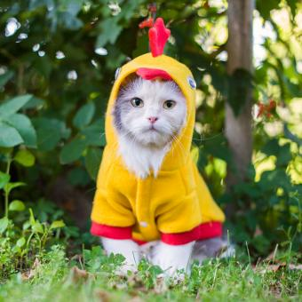 Silly Cats in Halloween Costumes
